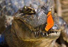 wonderous world by Alexandra Sailer-caiman and butterflies in Pantanal, Southern Brazil
