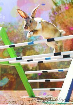 I <3 rabbit jumping