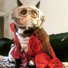 15 purrrrfect cat Halloween costumes that your cat will hate as much as you hated that pun. Halloween Cat, Halloween Costumes, Cat Cosplay, Puppies And Kitties, Star Lord, Guardians Of The Galaxy, Someecards, Bucky, A Funny