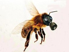 bee green roof project - Cerca con Google