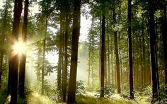 Hidding behind trees