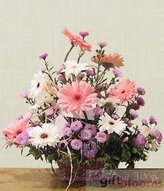 chile Flowers - Gerberas in Canasta $59.99