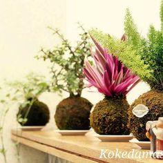 Nuestra variedad de Kokedamas para decorar cualquier ambiente y darle verde y por supuesto vida ♻!! #roheo #rhoeo #arbolitozen #monedita #kodeco