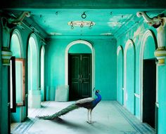 The Queen's Room, Udaipur City Palace  The Indian Song Project - Reinventing the Panchatantra  A few years ago, photographer Karen Knorr took these stunning images of gorgeous forts and palaces in india and then digitally inserted photographs of animals she had shot previously. Nature made vs man made. What a fantastic juxtaposition..