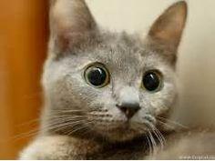 Funny Cats - Cats Wallpaper (9473424) - Fanpop