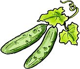 Cukes are hot-weather plants. They hate cold soil and cold weather, so the soil should be at least 65 degrees, preferably 70 degrees, when planting.