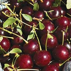 The Best Fruit Trees To Grow In Central Texas More Clay