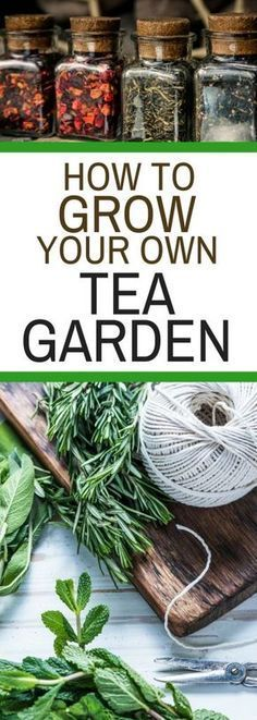 Gardening Tips Tea garden plant ideas. A lovely someday idea. - How to Grow Your Own Tea Garden will show you how easy it is to have the ingredients for your favorite teas just outside your door. Who knew it would be so easy?
