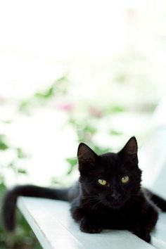 I think I'm in love with black cats *___* <3