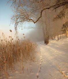 35PHOTO - Олег Астахов - Зимнее утро