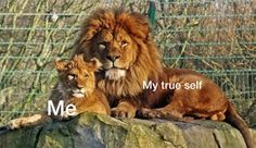 I always hold back, because I fear people may hate my true self. Like a cube I didn't interfere with trouble and always quit my roar. Time to build up my true self.