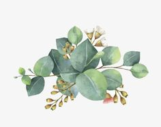 watercolor leaves, Leaf, Green, White Flowers PNG Image
