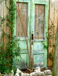 2 old doors against a garden wall with vines to grow up over it