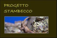 Banner con link (foto di M.Speziari) alle pagine del progetto dove è possibile accedere all'adozione digitale dello Stambecco per sostenere il progetto di conservazione (www.uomoeterritoriopronatura.it).