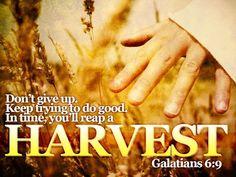 Harvest Galatians 6:9