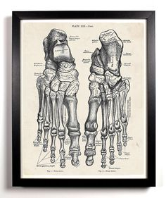 The Human Feet Anatomy Antique Illustration  8 x 10 Giclee Art Print Upcled Collage Recycled Book Art Buy 2 Get 1 FREE