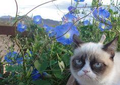 """cat misanthropist: """"i don´t like flowers, children and music"""""""