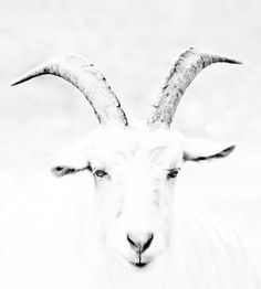 A portrait : Himalayan goat by Nitin  Prabhudesai on 500px