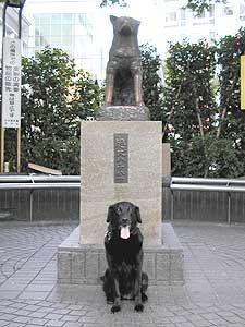 Hachiko statue, Shibuya station, Japan Hachiko Statue, Pet Cemetery, Shibuya Tokyo, Chiba, Inu, Japan, Pets, Awesome, Sweet