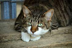 9 วิธีกําจัดกลิ่นขี้แมวให้หมดไป ความรู้ดีดีที่ทาสแมว ควรอ่าน!!   https://www.tipsza.com/%e0%b8%81%e0%b9%8d%e0%b8%b2%e0%b8%88%e0%b8%b1%e0%b8%94%e0%b8%81%e0%b8%a5%e0%b8%b4%e0%b9%88%e0%b8%99%e0%b8%82%e0%b8%b5%e0%b9%89%e0%b9%81%e0%b8%a1%e0%b8%a7/  #กําจัดกลิ่นขี้แมว #วิธีกําจัดกลิ่นขี้แมว #กําจัดกลิ่นขี้แมวในห้อง