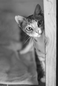 looking for me? | Flickr - Photo Sharing!