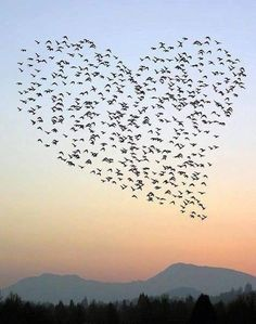 We love this birdy heart picture!