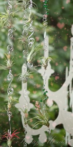 Hanging air plants at Teacups and Ponies