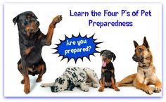 pet preparedness - are you ready to take care of your pets if a natural disaster strikes? Dog Insurance, Beautiful Soul, Natural Disasters, Survival Skills, Giveaway, Mom, Pets, Animals, Products