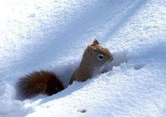 in de sneeuw | Mia's Paradijs