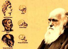 Darwinismo social: Pedro G - El darwinismo social es una teoría social inspirada en la teoría biológica de la selección natural de Charles Darwin.