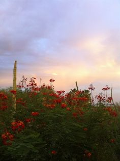 Nice Arizona-Sonoran Desert Museum - Tucson, AZ by janine