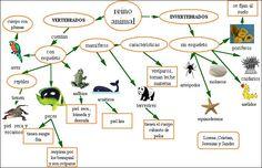 esta e unha foto donde se pode ver a estructura , nutricion , repruducion e curiosidades do reino animal