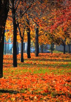 #Montreal #Canada #Autumn #Fall