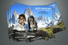 Web Design Services, Cattery, Rocky Mountains, Terrier, Graphic Design, Animals, Animales, Animaux, Terriers