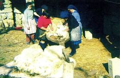 "Página Oficial do Rancho Folclorico ""Meu País"" de Maisons-Alfort Wool, Painting, Folklore, Ranch, Painting Art, Paintings, Painted Canvas, Drawings"