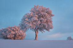 Paysage, Nature, Ciel, Neige