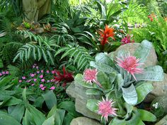Tropical Plants (Grandma's Boy)