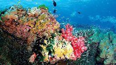 https://www.i-sabuy.com/ ส่วนการดำน้ำอีกประเภทที่ต้องอาศัยทักษะและอุปกรณ์ คือ การดำน้ำลึก ที่เรียกว่า สกูบ้า (Scuba หรือ Self-contained Underwater Breathing Apparatus) ดำน้ำลึก … http://www.deepbluediving.org/dive-computers-vs-dive-tables/