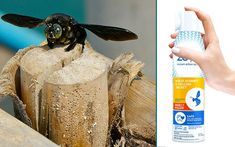 Want to get rid of insects without spraying dangerous chemicals? Zevo has a formula that's safe for people and pets! Here's our #review. #bug #spray #HomeDepot Carpenter Bee, Pet Safe, Bugs, Rid, Insects, People, Products, Worker Bee, People Illustration