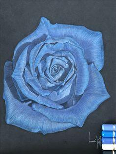 Blue Rose Finished  #art #drawing #colouredpencil #flower #rose #blue #petals #artwork