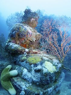 Statue of lord Buddha photographed during a dive at the Temple, near Pemuteran, Bali    robert scales on flickr