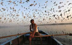 Pássaros migratórios voam sobre o barco de um homem no rio Yamuna, em Délhi, na Índia.