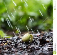 Resultado de imagem para Imagens ou gifs de lindos jardins