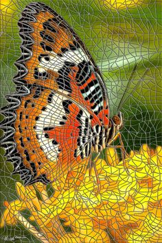 Butterfly - Worth1000 Contests