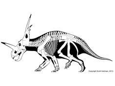 Scott Hartman Skeletal drawing: Styracosaurus albertensis