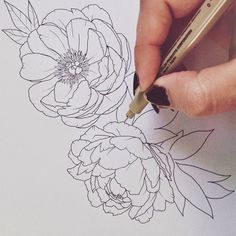 Drawing peonies for a new client tattoo.