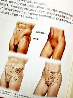 Hip Anatomy, Muscle Anatomy, Anatomy Study, Anatomy Art, Male Pose Reference, Body Reference Drawing, Anatomy Reference, Human Anatomy Drawing, Human Body Anatomy