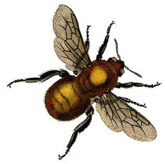 *The Graphics Fairy LLC*: Vintage Clip Art - Beautiful Golden Bee