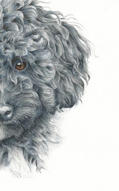 This study of a poodle in watercolor has just been revealed in the Online School! Creating curly hair in watercolor can be overwhelming – but it doesn't have to be intimidating, and you can do this! This course demonstrates how to create the curly black …
