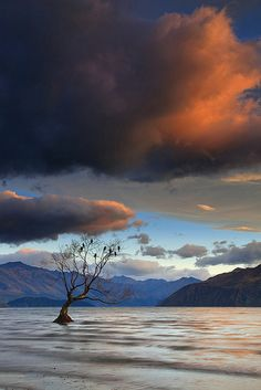 Let Sleeping Birds Lie II by Chris Gin, Wanaka, New Zeland via Flickr